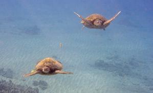 Turtle4_copy
