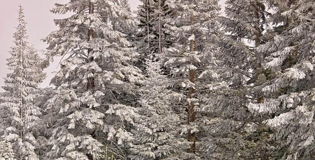 Snowtreesshds
